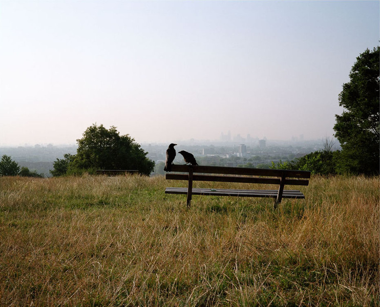 The Heath by Andy Sewell