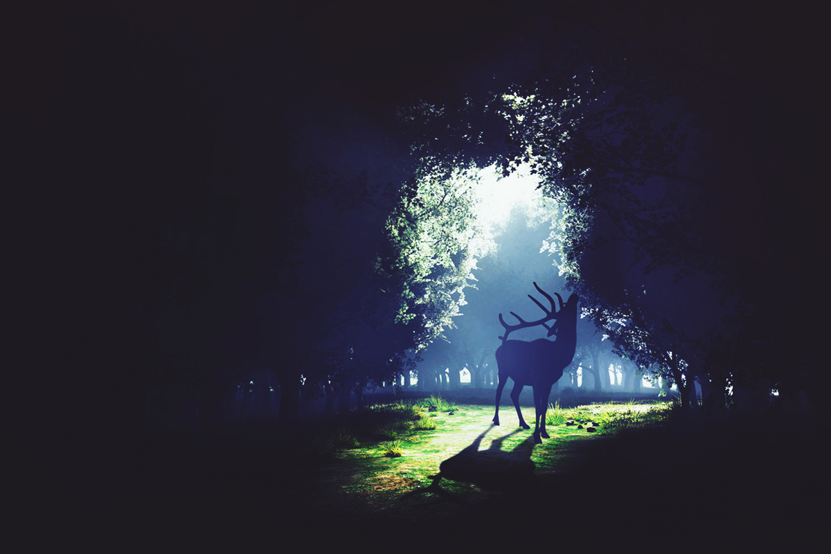 Dreamscapes and Spirit Animals