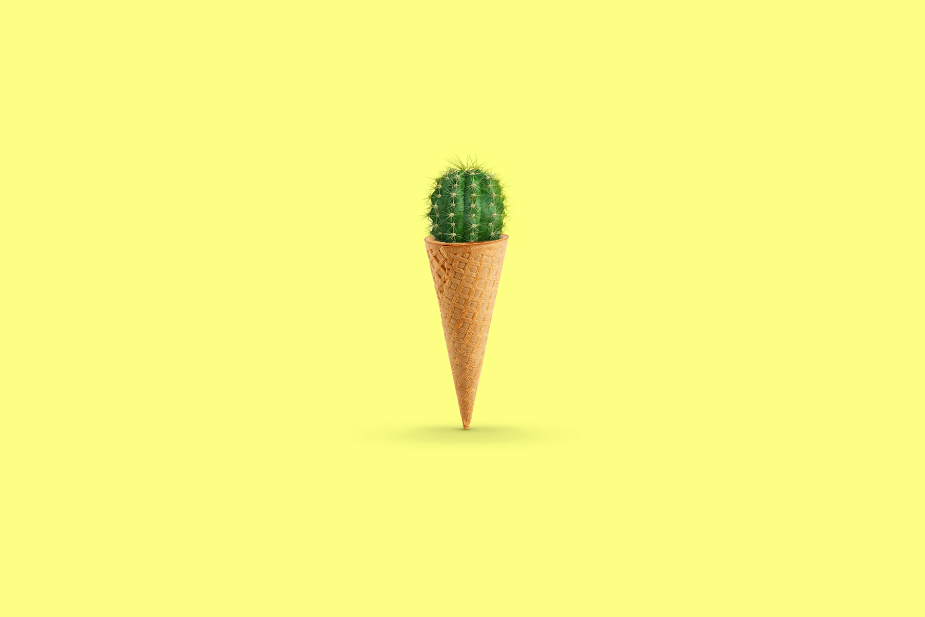 Cactus Ice-Cream and Tropical-Coloured Wit