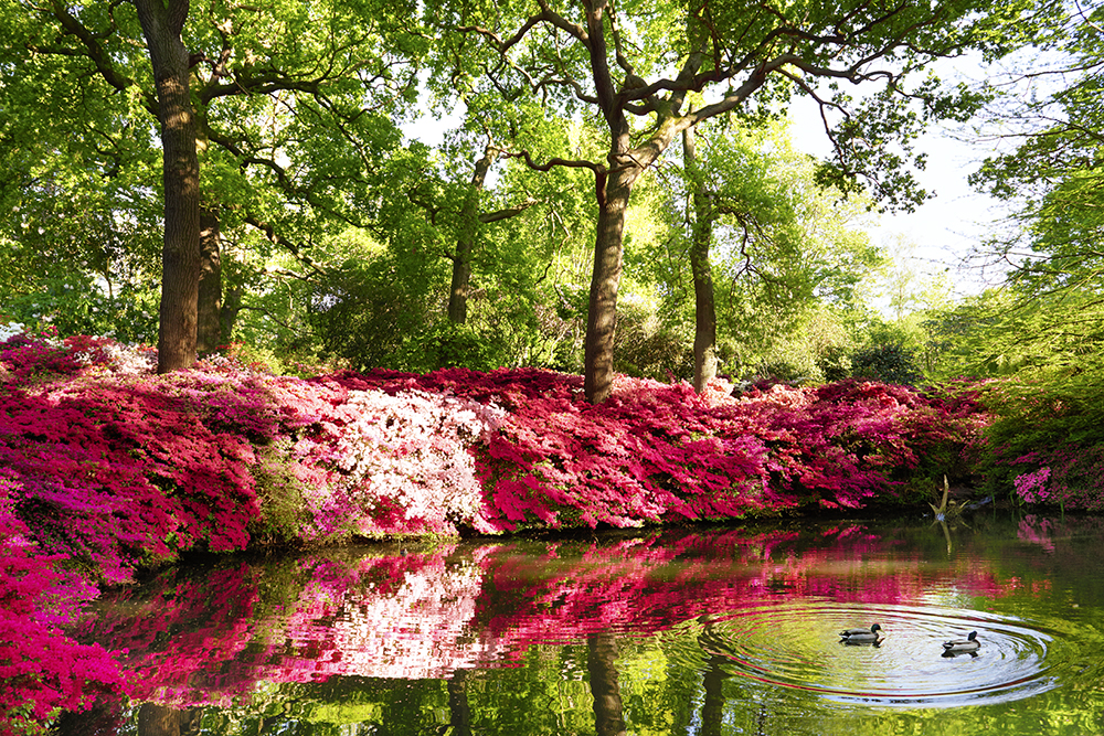 Isabella Plantation_Richmond Park5